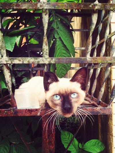 Cat in the trash! Cat♡ Hello World BelémParáBrasil Catinthetrash