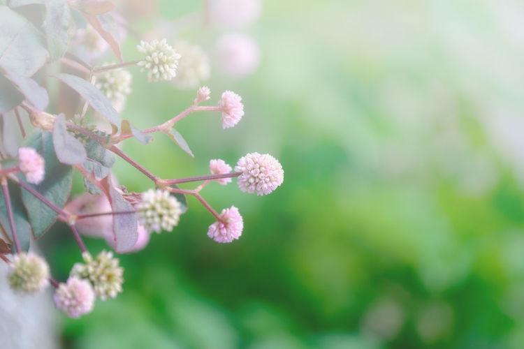 冬色:小さなピンク Japan Light And Shadow Kitakyushu Fukuoka EyeEm Best Shots EyeEm Gallery FUJIFILM X-T1 Fujifilm_xseries Taking Photos Flower Nature Soft Focus