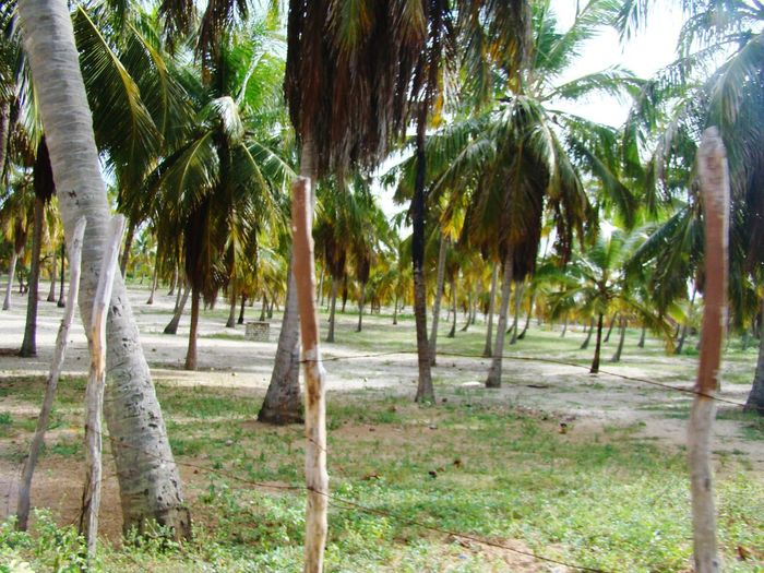 Palm trees on field