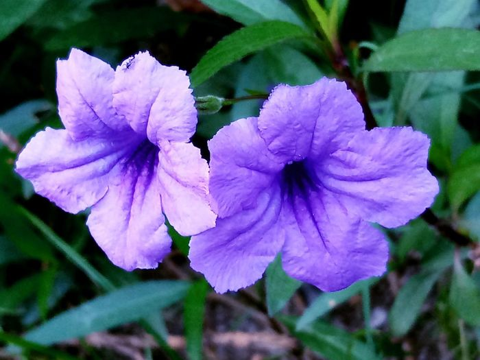 Beauty In Nature Close-up Day Flower Flower Head Focus On Foreground Freshness Leaf Nature No People Outdoors Purple Softness