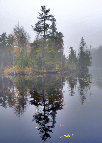 Reflection Tree Water Nature Rainy Season Reflection_collection Upstate New York Reflections In The Water Outdoors Nature At Work Waterfront Adirondack Mountains Nature On Your Doorstep My View Right Now Share Your Adventure My Best Photo 2016 Autumn Colours Autumn Collection Natural Parkland Wilderness Beauty In Nature Reflection Autumn 2016 Foggymorning Fog