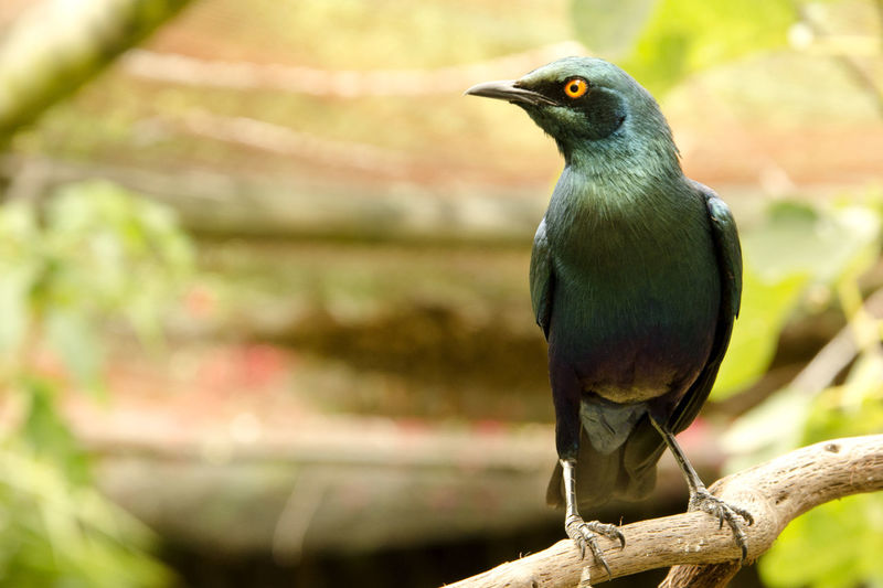 Bird Animal Themes One Animal Animal Vertebrate Animal Wildlife Animals In The Wild Perching Focus On Foreground Day No People Looking Close-up Tree Nature Looking Away Outdoors Branch Beak Plant