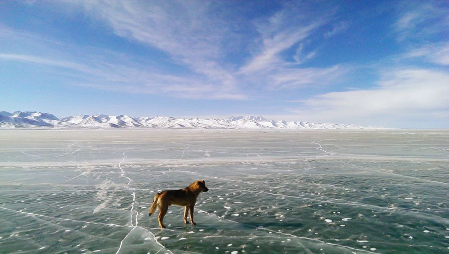 Dog Standing On Bare Field In Winter