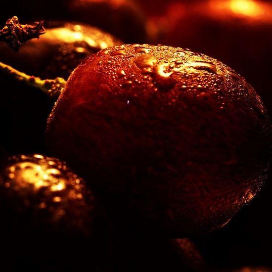 عنب  احمر تصوير  تصويري  تصميم اليوم الدوحة الامارات السعودية  قطر لبنان لقطة_جميلة غرد_بصورة قطرات ماء