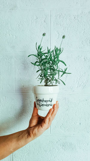 Hand holding potted plant against wall