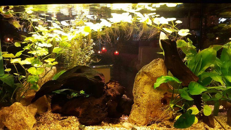 Wasserwelt Unterwasserwelt Aquarium Pflanzenwelt
