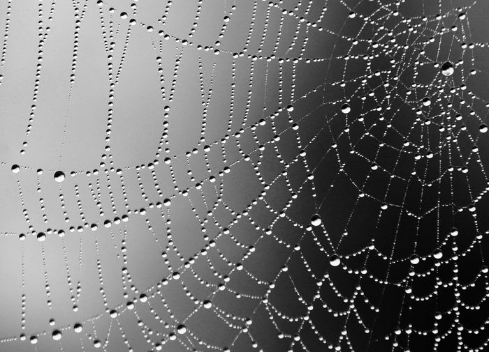 A Spider Designs the Universe Abstract Abstract Art Backgrounds Close-up Day Design Dew Drop Focus On Foreground Full Frame Nature No People Pattern Purity Rain RainDrop Spider Art Spider Architecture Spiderweb Transparent Universe Water Wet The Great Outdoors - 2018 EyeEm Awards