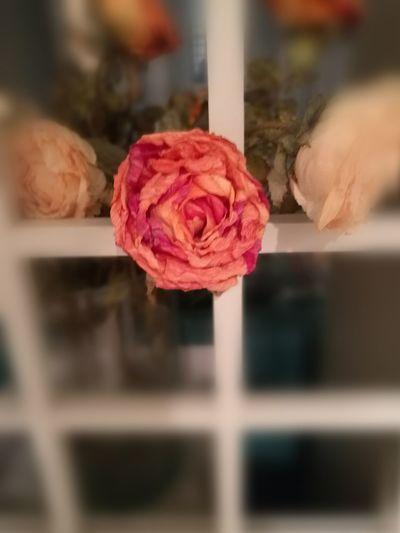 Still Life Flowers Caducity Dry Flower  Roses