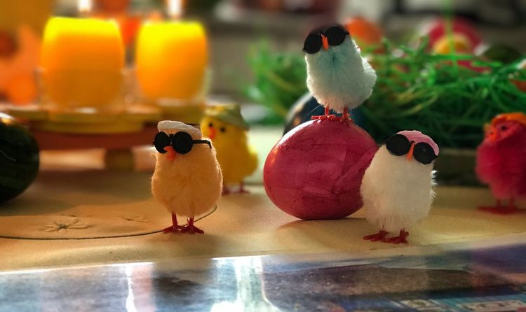 Rock Star Chick Band 😎 Rock Formation Rock Famous Band Photography Easter Animals In The Wild IPhoneography Egg Colors Colorful Rich Sunglasses Rabbit Fluffy Warm Light Candlelight Bird Group Of Animals No People Close-up Table