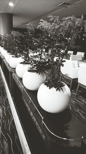 Black And White Japan Plants Hotel