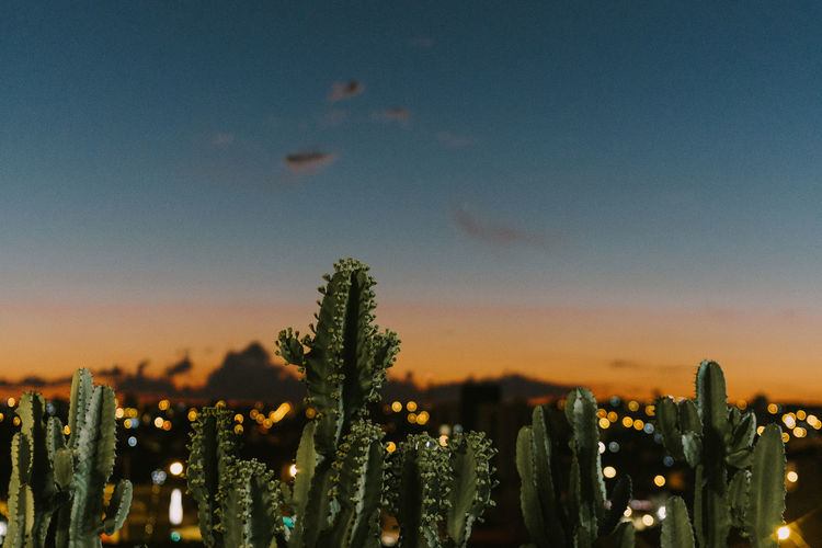 www.adrianosobralfotografias.com.br Cactus Beauty In Nature Citylights Cityscape Close-up Go Higher Growth Nature No People Outdoors Plant Sky Skyscraper Sunset Tranquility The Creative - 2018 EyeEm Awards Summer Road Tripping