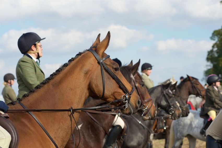 Photographs from Yorkshire Farmers Bloodhounds Hound Exercise October 2015. Bloodhound Farmers Horse Jumping Horse Riding Horseback Riding Horses HOUNDS Hunting Yorkshire Yorkshire Farmers Bloodhounds