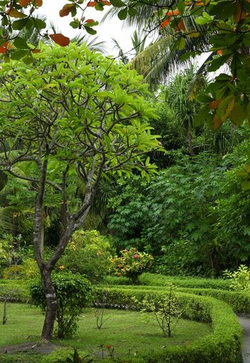 Maldives Trees Bushes Garden Tree