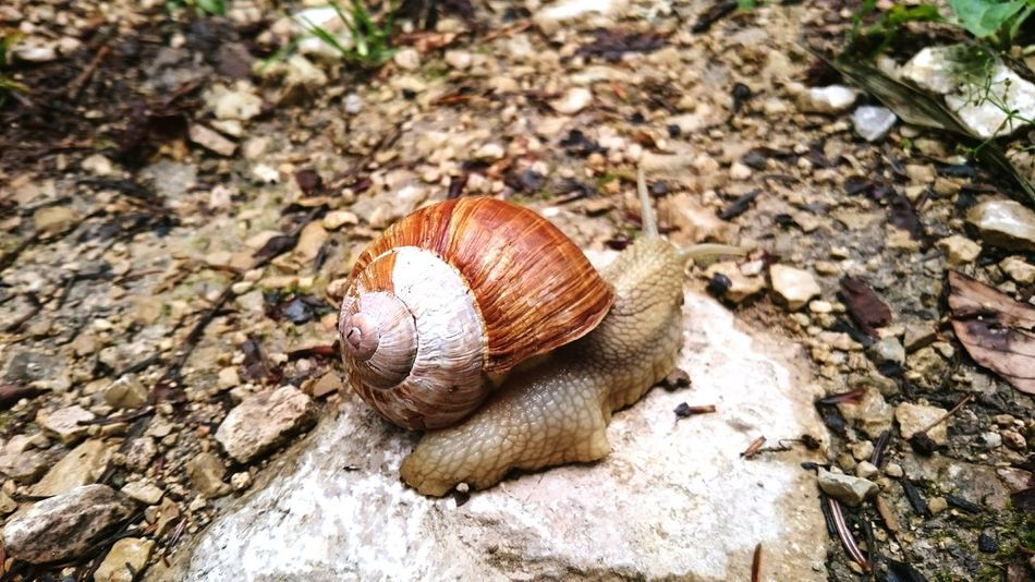 Nature Schnecke Snail Animals In The Wild No People