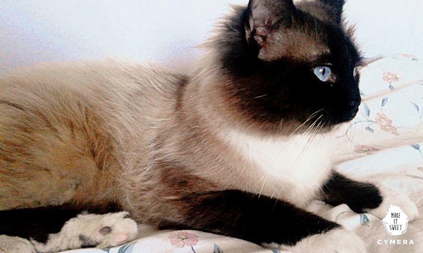 Kater Katze Katzenfoto Cat♡ Cat Cats 🐱 Cat Photography Pretty♡ Pretty Beauty Beautiful Beautiful Animals  Animal Tier Tierfotografie Tiere/Animals Tierisch Schön Tierportrait Tierfoto Miau Miau ♥  Miau *-*  Miauuu Miauuu 😺 Miau❤️ First Eyeem Photo