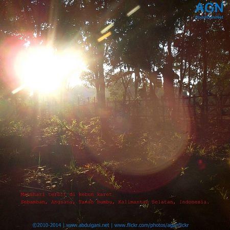 Matahari terbit di kebun karet Sebamban Angsana TanahBumbu Kalimantanselatan Indonesia