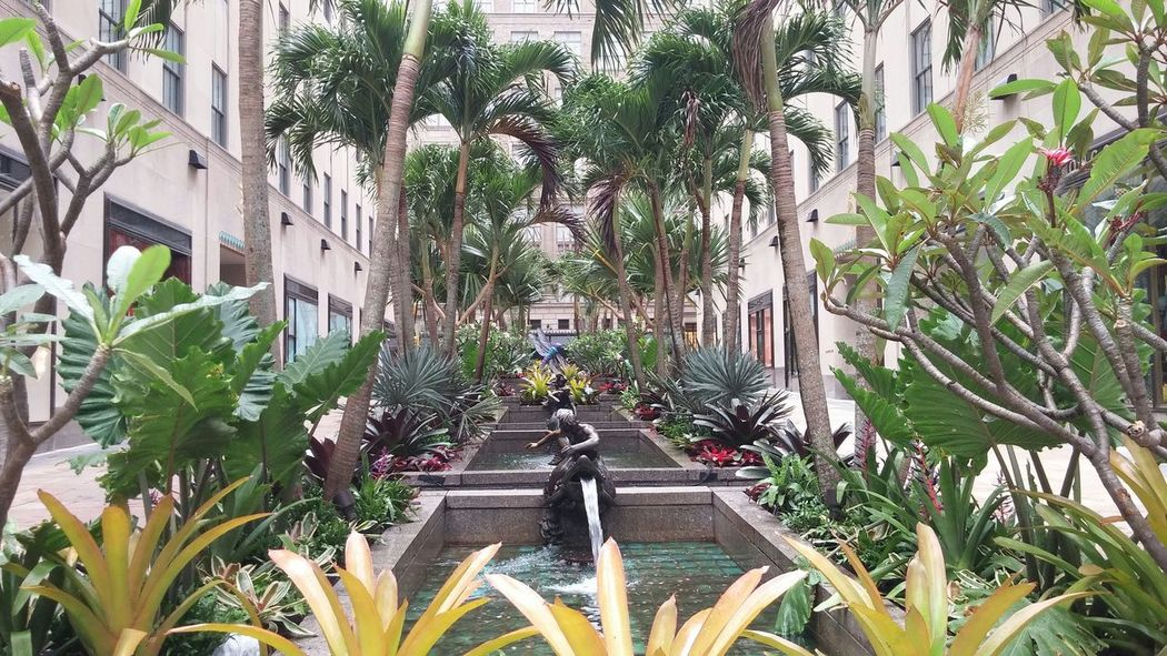Rockafellar Center Palm Tree Island Palm Trees The Best Of New York Discover Your City Exotic Flowers Newyorkcity