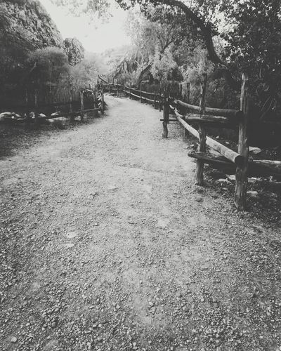 Would absolutely love to do an engagement shoot here! I love this park Taking Photos Relaxing Enjoying Life Ari Yamagishi Photography Qapture Studios Random Black And White Las Vegas Spring Mountain Ranch State Park