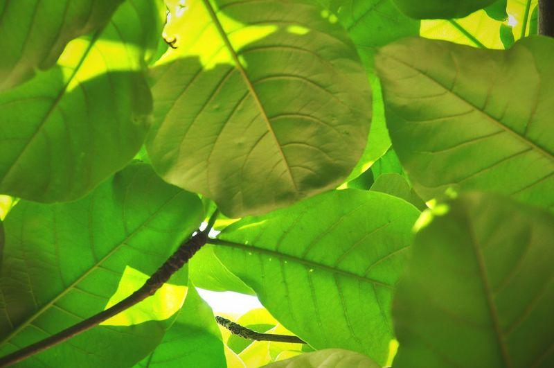 GREEN🌿 ใบไม้ แสงและเงา สีเขียว Green Color Threes Thailand🇹🇭