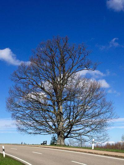 Nackt... Frühling Baum Three EyeEm Nature Lover Tadaa Community Daswasichsehe😊