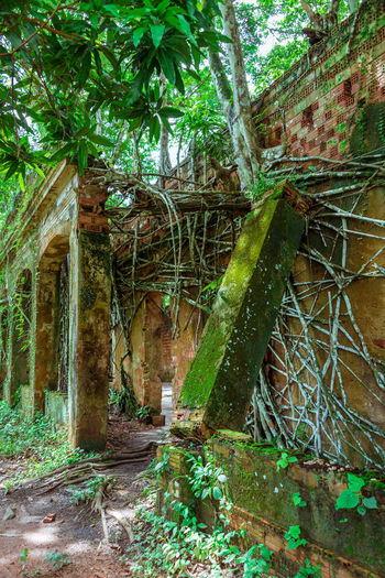 Ruins of Paricatuba Abandoned Buildings Amazon Amazonas Beauty In Nature Day Green Color Growth Nature No People Paricatuba Plant Ruins Tree