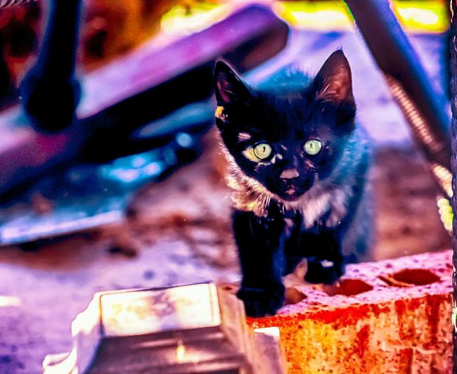 EyeEm Gallery Eyeembestpics Eyeem Gallery Photography EyeEm Best Shots Cat Lovers Kitten Kitty Animal Love EyeEmBestPics Love