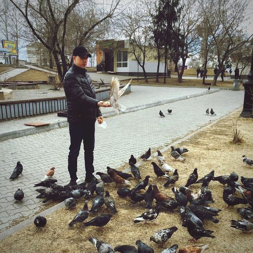 Full length of man feeding birds