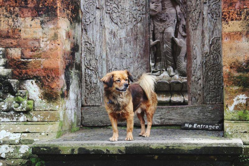 Dog on steps