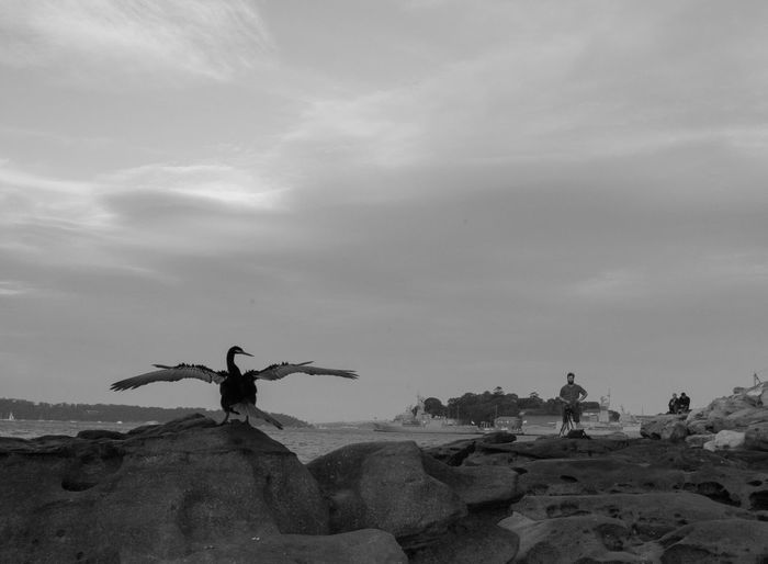 This Bird, clearly a poser, noticed all the sunset photographers and perched itself in the middle of everyones shot Beauty In Nature Bird Blackandwhite Clouds Day Monochrome Photography Nature Nature Ocean Outdoors Posing For The Camera Rocks And Water Sky When Nature Takes Over