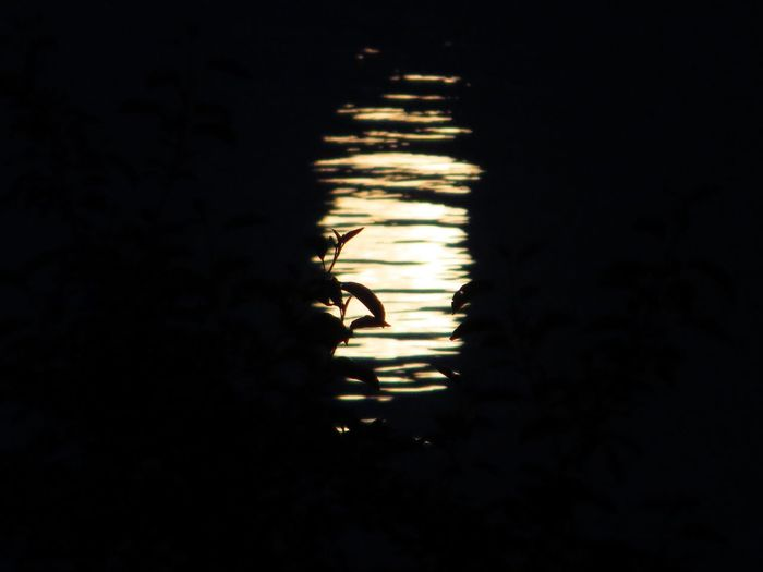 Moonlight Moonlight On The Water Water Wavey Night Nightphotography Simplicity Minimalism EyeEm Best Shots Eye4photography  Leaves Leaves Silhouette a full moon that night, bright moonlight was shining on the wavey water, showing partially some leaves sihouette--- it was an enchanting night ...