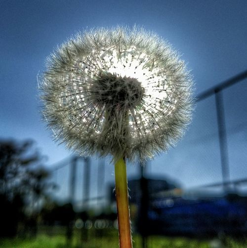 Flower Nature Fragility Beauty In Nature Outdoors Day Growth Sky Flower Head No People Close-up Freshness