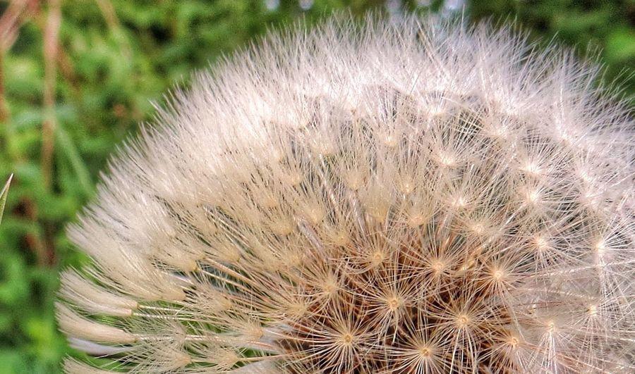 Seed Enjoying Nature Tadaa Community EyeEm