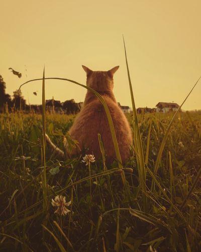 Cat sitting in a field