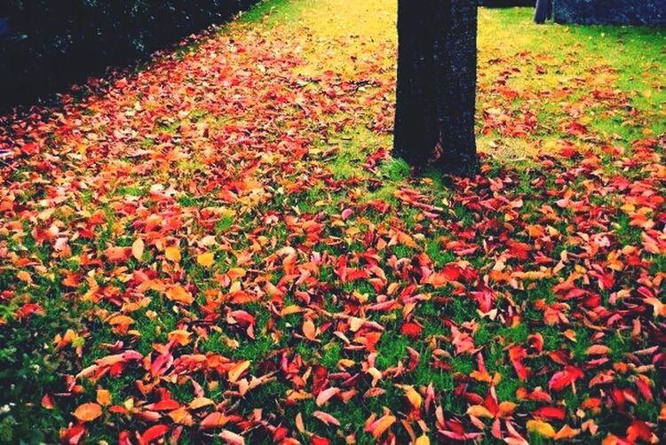Autumn leafs ❤