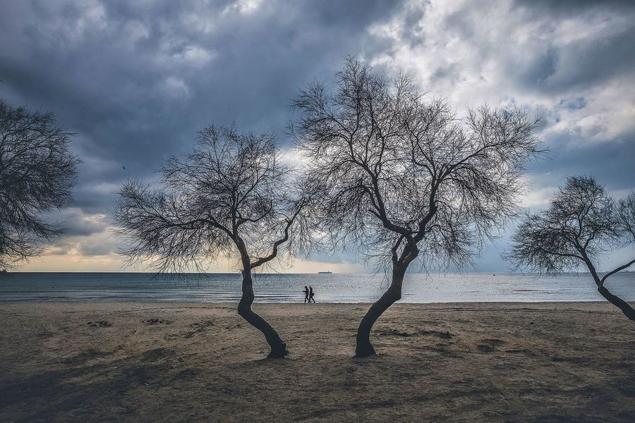 Tree Sky Nature Beauty In Nature Bare Tree Tranquility Landscape Cloud - Sky Scenics Sea Beach Sand Water Tranquil Scene Outdoors Day No People Branch Animal Themes Horizon Over Water