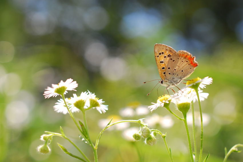 Nature Butterfly Flowers Fragility Butterfly - Insect Butterfly On Flower Butterfly Collection Insect Insects Beautiful Nature Insect Photography Natural Beauty Beauty In Nature EyeEm Nature Lover Naturelovers Nature_collection Beautiful Nature Nature Photography My Point Of View