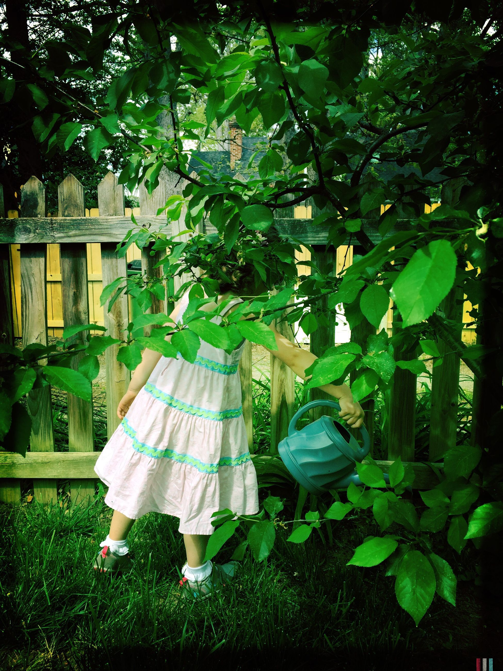 front or back yard, tree, day, rear view, outdoors, growth, green color, nature, grass, full length, one person, wedding dress, people