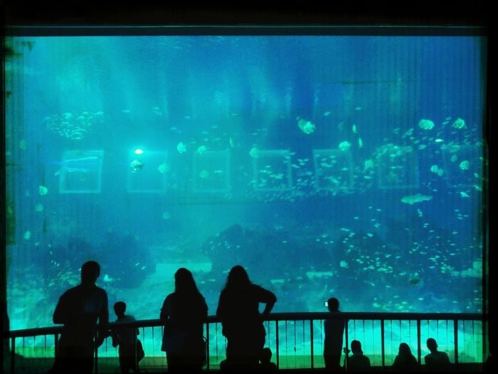Welcome to Rapture. Aquarium Underwater World Bioshock Singapore