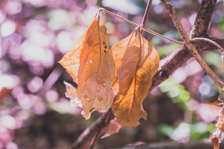 The Leaves Change Colors Autumn Beauty In Nature Close-up Dry Dry Leaf Dry Leaf On The Floor Dry Leafs Leaf Leaf Vein Leaves Natural Condition Plant Plant Part The Leaves Tree