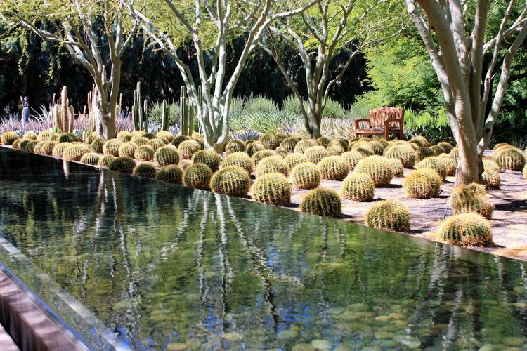 Peace and tranquility in the California desert Cacti Cacti Garden Day Gardens Nature No People Outdoors Palm Tree Peace Reflection Sunnylands Tranquility Tree Water