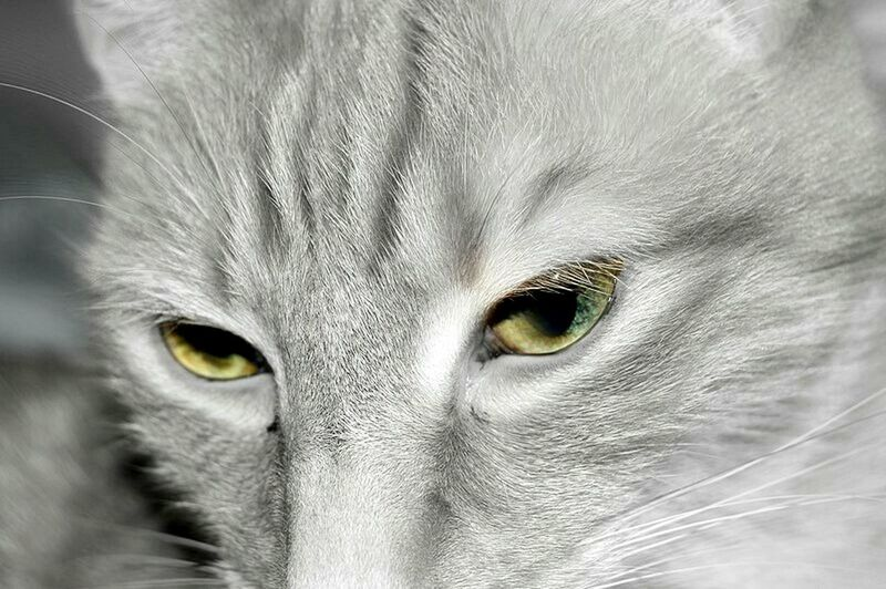Light And Shadow Eyeemphotography Nikon D3200 For The Love Of Editing Colorfull Life Creative Edit Cat Close Up Cats Of EyeEm