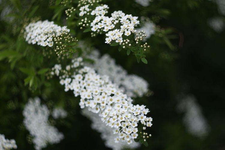 Flowers Tree Relaxing Helios 44-2 58mm F2 Helios 44-2 44-2 Depth Of Field Nofilter Secret Garden Bokeh