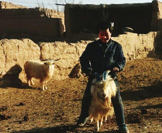 调皮尕娃 Agriculture One Man Only Livestock Farm Adult Only Men One Person Men Domestic Animals Looking At Camera Rural Scene Outdoors People One Animal Mature Adult Mammal Farmer Smiling Adults Only Human Face