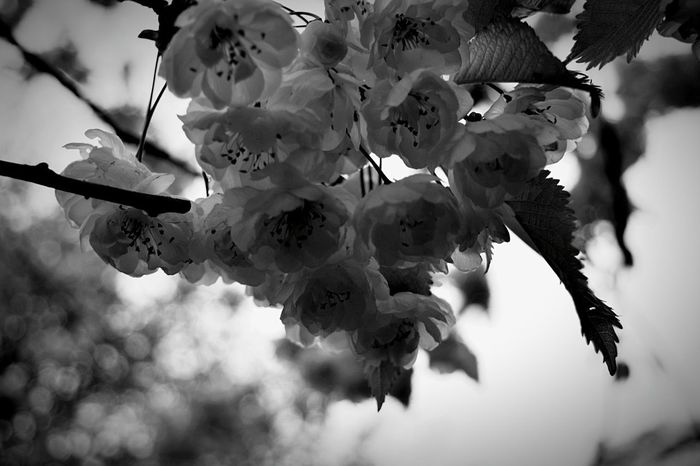 Tree Nature No People Close-up Branch Day Growth Beauty In Nature Food Outdoors Flower Freshness Sky Blackandwhite Blossom Edinburgh Princes Street Flowers, Nature And Beauty EyeEmNewHere
