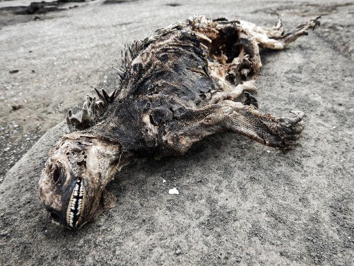 Close-up of dead reptile