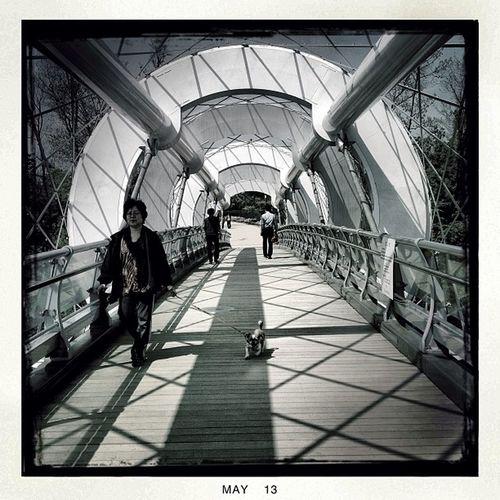 Silk Bridge, Seocho #seoul_korea #seoul #korea #bridge #silk #people #street #travel #trek #trip #trail #hipstamatic Street People Hipstamatic Bridge Silk Travel Trip Korea Seoul Trail Trek Seoul_korea