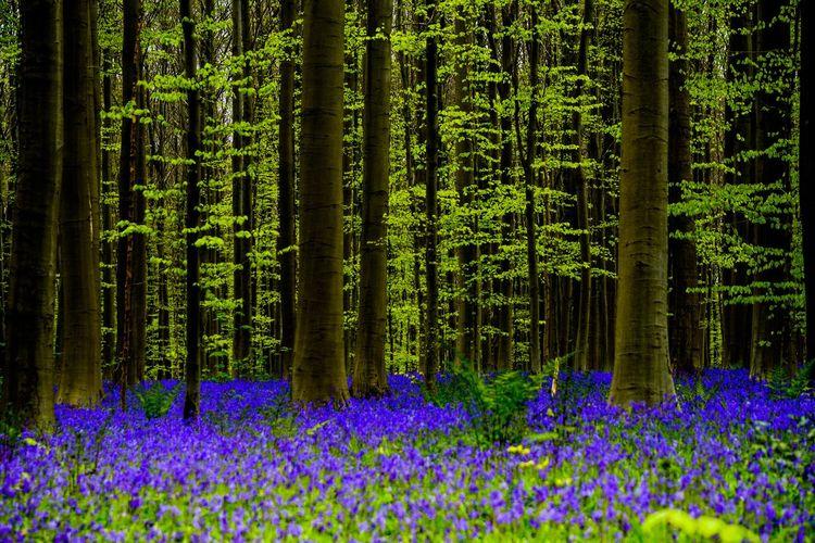 Purple flowering plants in forest