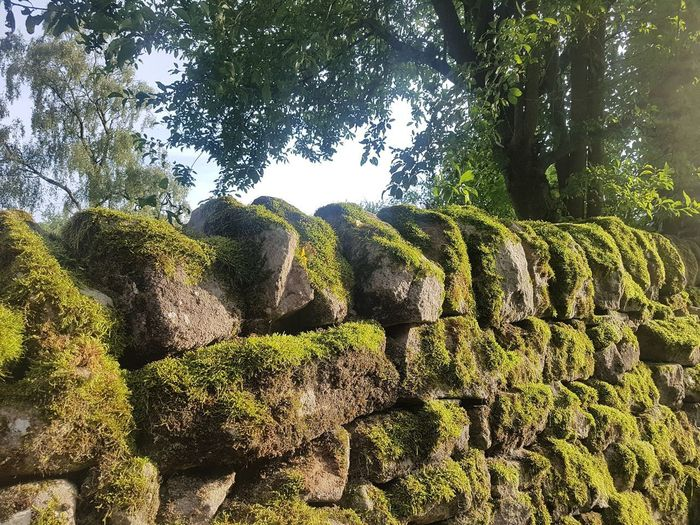 Low angle view of rocks against trees in forest