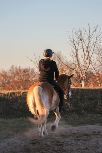 Rear view of woman riding horse on field against clear sky