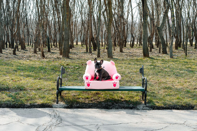 Almost spring. Frenchie French Bulldog Frenchbulldog Animal Themes Animal Dog One Animal Tree Tree Trunk Park - Man Made Space Outdoor Play Equipment Playground Park Bench Bench Park Streetwise Photography The Art Of Street Photography